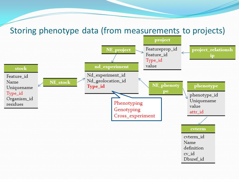 Storing phenotype data (from measurements to projects) stock Feature_id Name Uniquename Type_id Organism_id residues nd_experiment Nd_experiment_id Nd_geolocation_id Type_id phenotype phenotype_id Uniquename value attr_id cvterm cvterm_id Name definition cv_id Dbxref_id Phenotyping Genotyping Cross_experiment project Featureprop_id Feature_id Type_id value NE_stock NE_phenoty pe project_relationsh ip NE_project