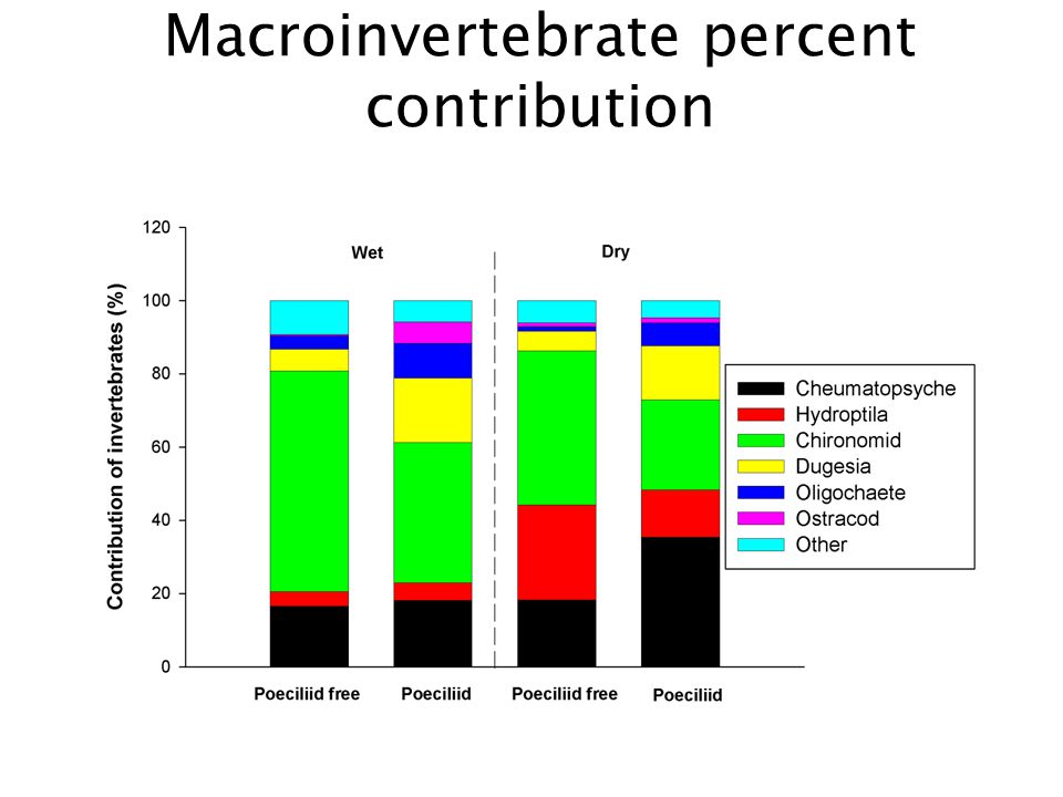 Macroinvertebrate percent contribution