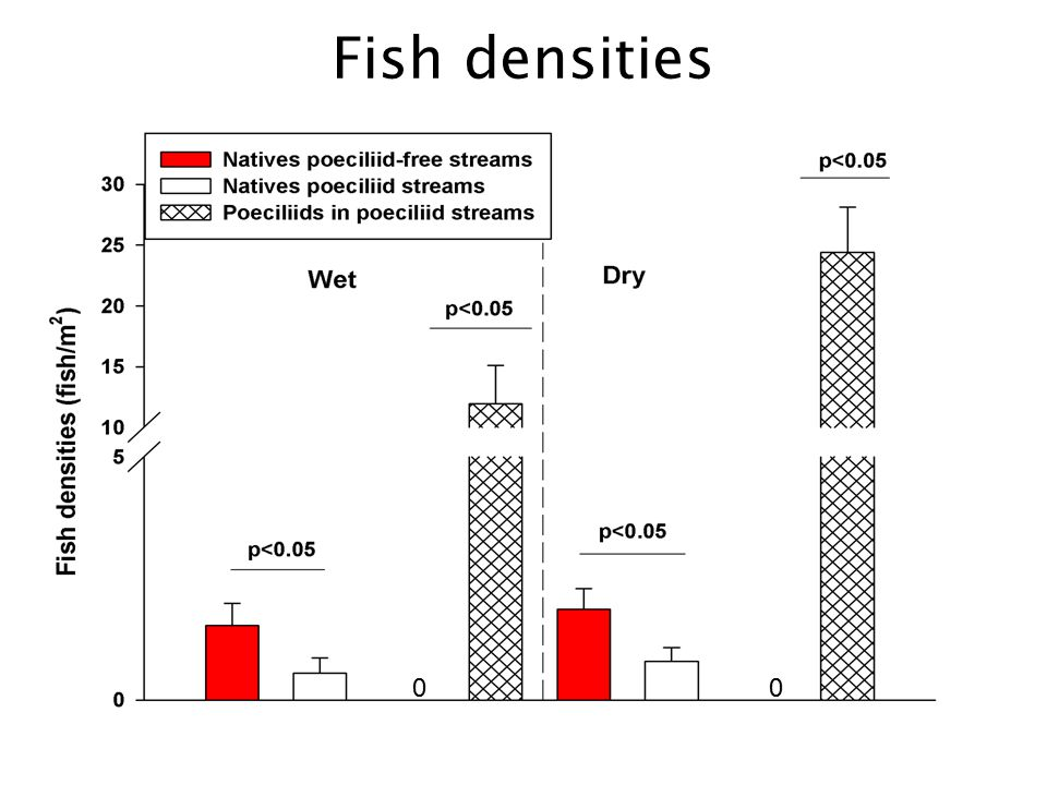 Fish densities 000