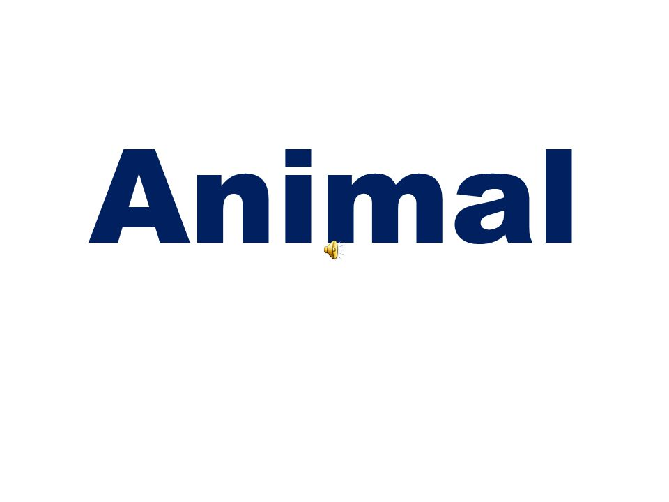 Cambridge Tests Useful Vocabulary ANIMALS Starters 1st Term
