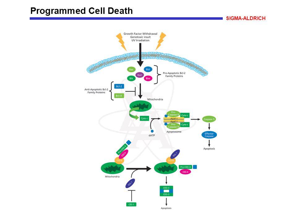 Programmed Cell Death SIGMA-ALDRICH