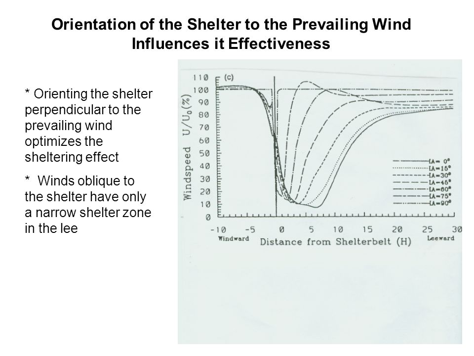Orientation of the Shelter to the Prevailing Wind Influences it Effectiveness * Orienting the shelter perpendicular to the prevailing wind optimizes the sheltering effect * Winds oblique to the shelter have only a narrow shelter zone in the lee