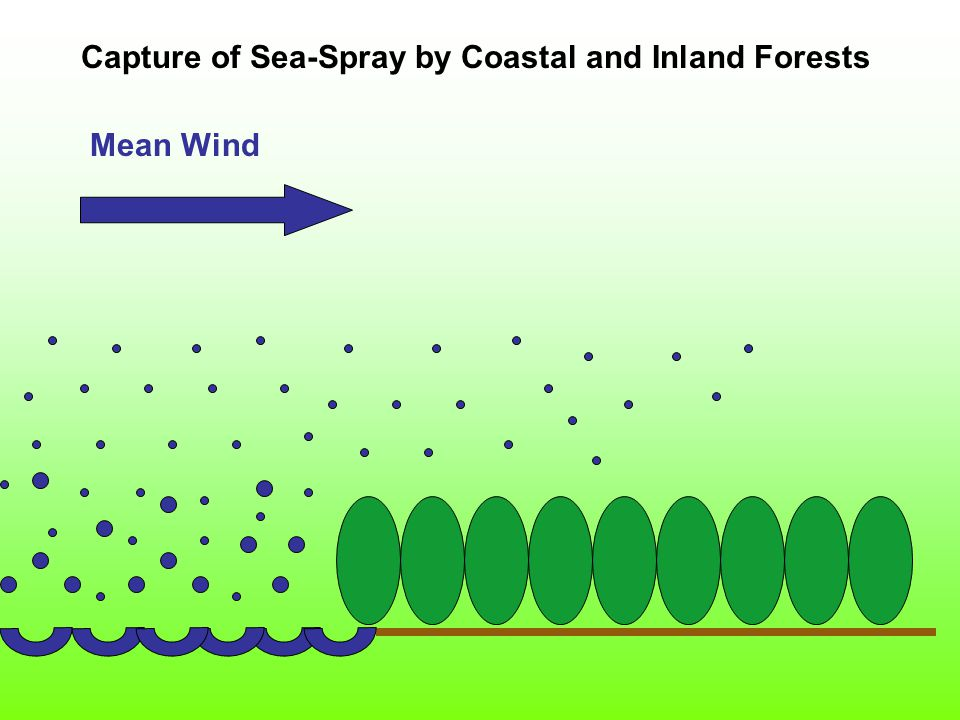 Mean Wind Capture of Sea-Spray by Coastal and Inland Forests