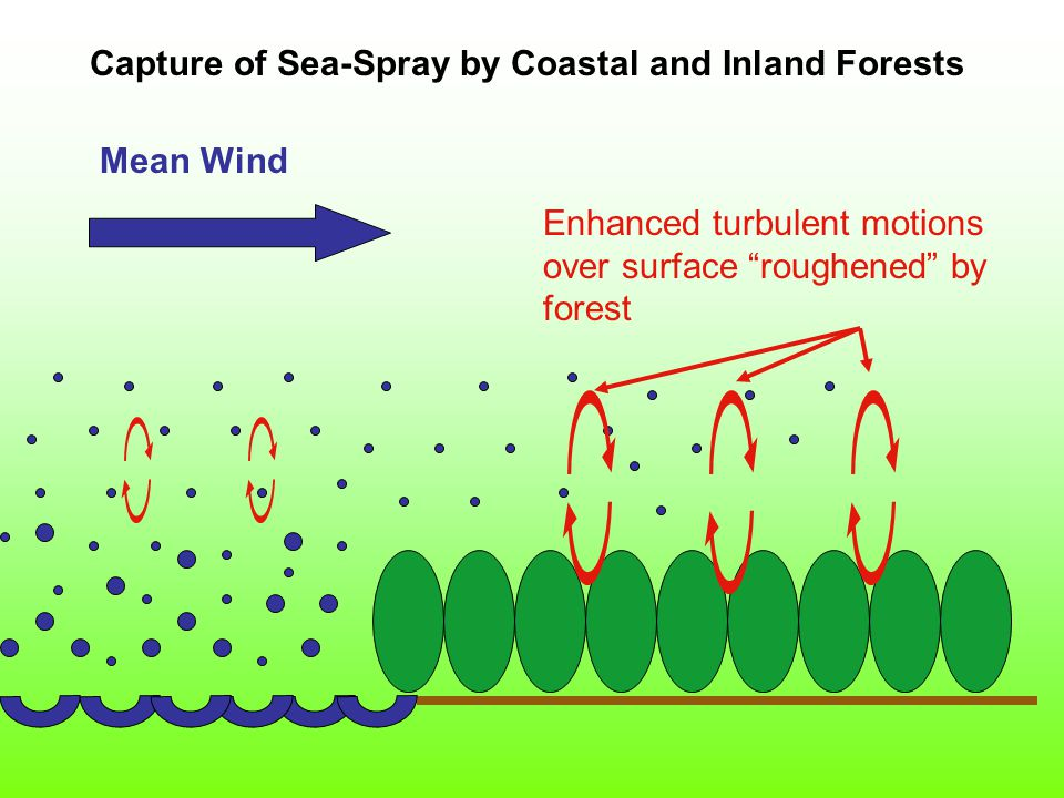 Mean Wind Enhanced turbulent motions over surface roughened by forest Capture of Sea-Spray by Coastal and Inland Forests