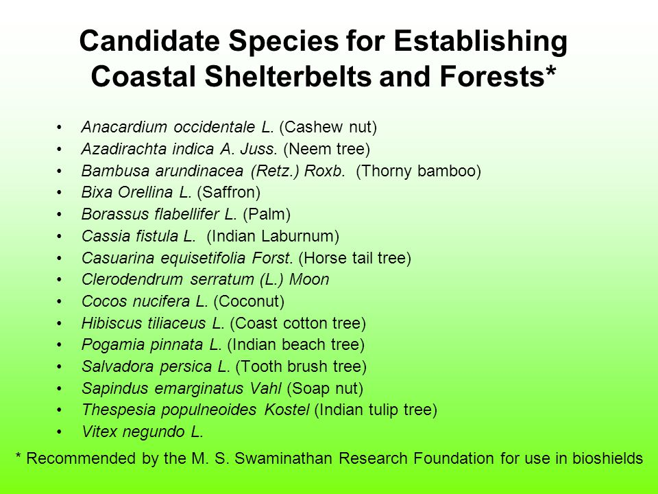 Candidate Species for Establishing Coastal Shelterbelts and Forests* Anacardium occidentale L.