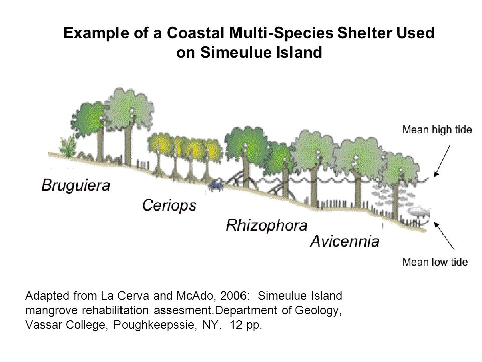 Example of a Coastal Multi-Species Shelter Used on Simeulue Island Adapted from La Cerva and McAdo, 2006: Simeulue Island mangrove rehabilitation assesment.Department of Geology, Vassar College, Poughkeepssie, NY.