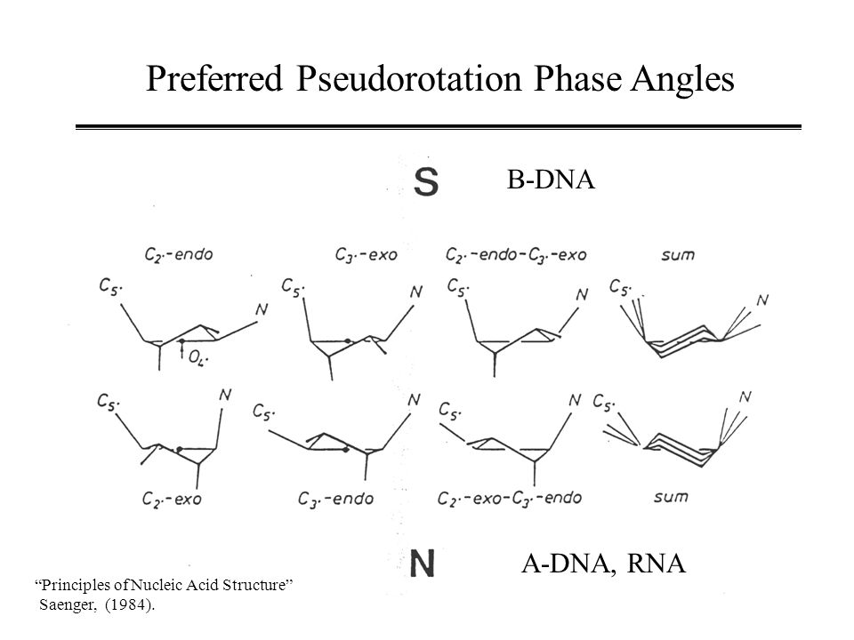 Preferred Pseudorotation Phase Angles Principles of Nucleic Acid Structure Saenger, (1984).
