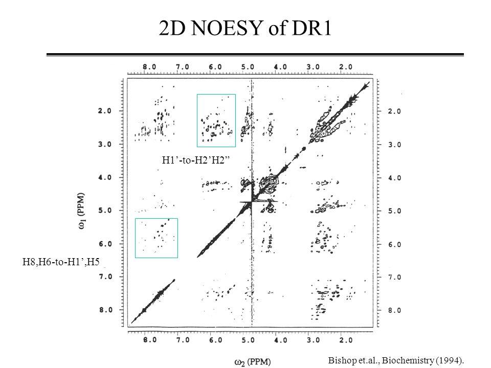 2D NOESY of DR1 H8,H6-to-H1',H5 H1'-to-H2'H2 Bishop et.al., Biochemistry (1994).