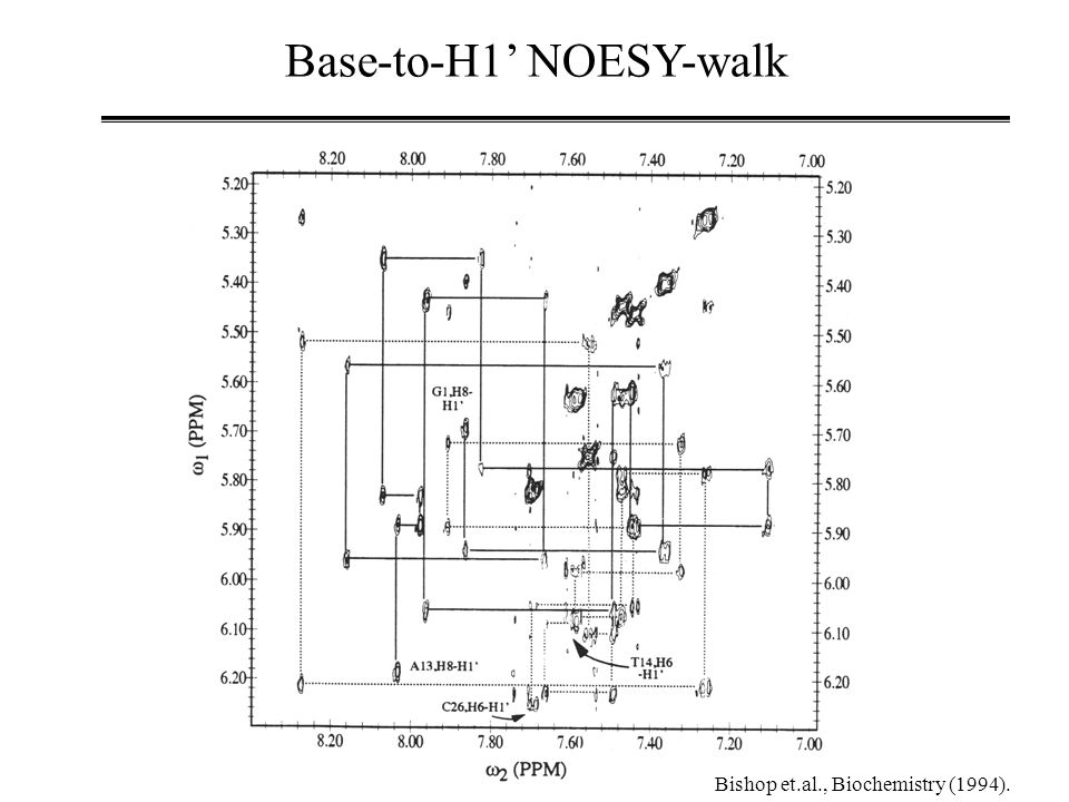 Base-to-H1' NOESY-walk Bishop et.al., Biochemistry (1994).