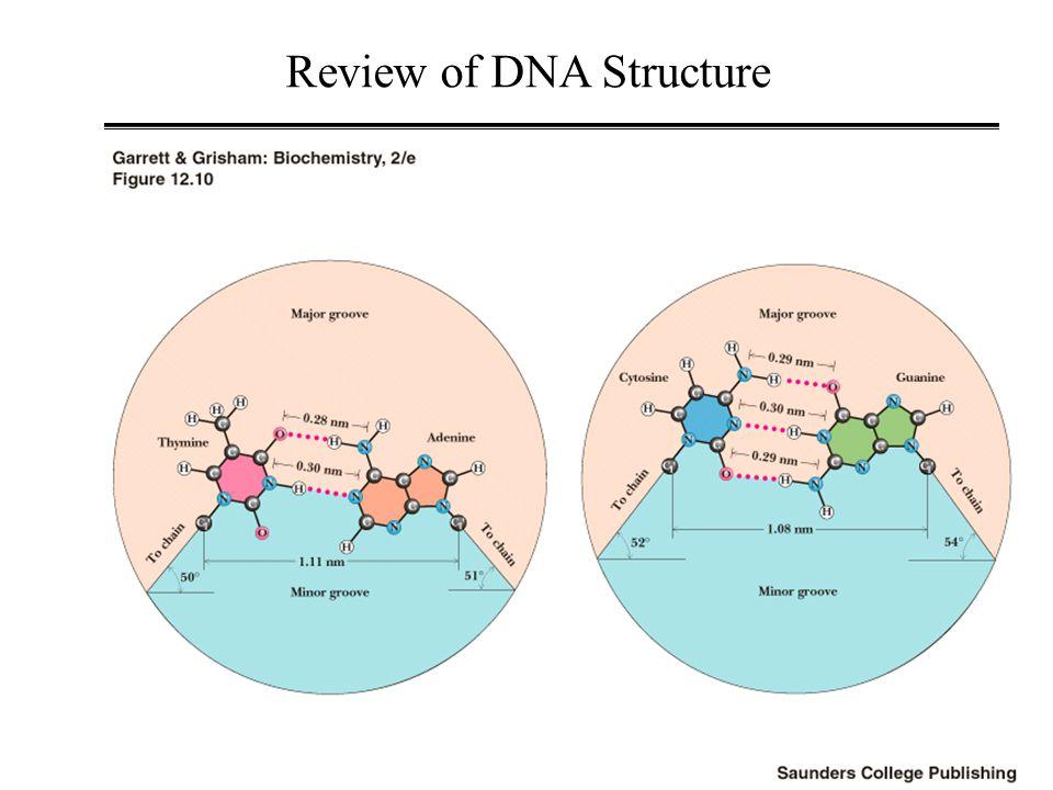 Base-to-H1' NOESY-walk Bishop et.al., Biochemistry (1994).