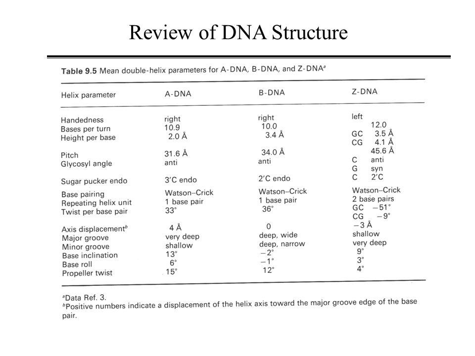 E.COSY H1'-to-H2'H2 A18,H1'-A18,H2 Bishop et.al., Bioch (1994).