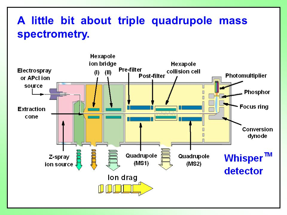 A little bit about triple quadrupole mass spectrometry.