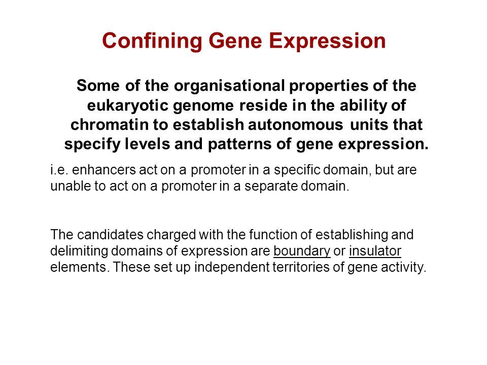 Chromatin Insulators and Boundary Elements