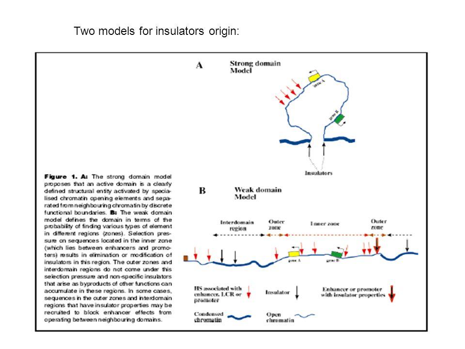 Figure 3 Mechanism of insulator effect on enhancer function.