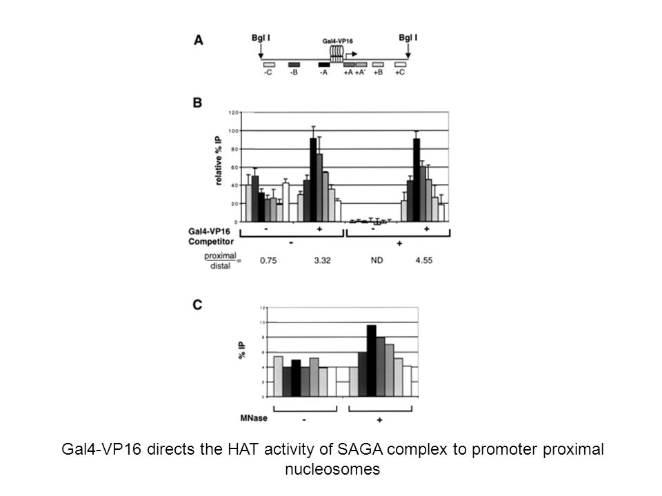 The HAT activity of SAGA and NuA4 but not of NuA3 is recruited by VP16 array +/- competitor + HAT + [3H]-acetil CoA Electrophoresis and flurorgraphy Is specific!