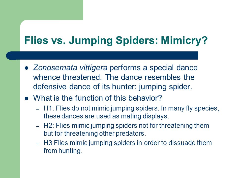 Flies vs. Jumping Spiders: Mimicry.