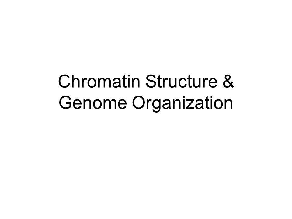 Overview of Chromosome Structure Nucleosomes –~200 bp DNA in 120 Å diameter coil –3.4 Å /bp x 200 = 680 Å –680/120 = 5X compaction 30nm fiber –Coil of nucleosomes w/ 6/turn –1200bp/120 Å vs 4080 Å = 34X compaction Chromatin loops –30nm fiber is looped into 15- 100Kbp loops –7-8 loops form rosette w/ bases of loops attached to central core of scaffold proteins –300 Å /rosette, 800Kbp/rosette = 800kbp/300 Å vs 2720000 Å  9000X compaction