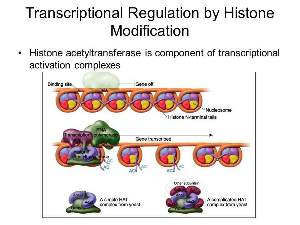 Genome Organization Sequence composition –Unique sequences Genes –Low copy # elements rRNA, 5S, tRNA genes –High copy # repetitive DNA Retroelements –LINEs –SINEs Simple Sequence DNA –Minisatellites (VNTR) –Microsatelites