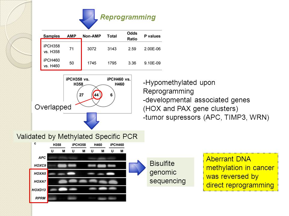 -Hypomethylated upon Reprogramming -developmental associated genes (HOX and PAX gene clusters) -tumor supressors (APC, TIMP3, WRN) Overlapped Reprogramming Validated by Methylated Specific PCR Bisulfite genomic sequencing Aberrant DNA methylation in cancer was reversed by direct reprogramming