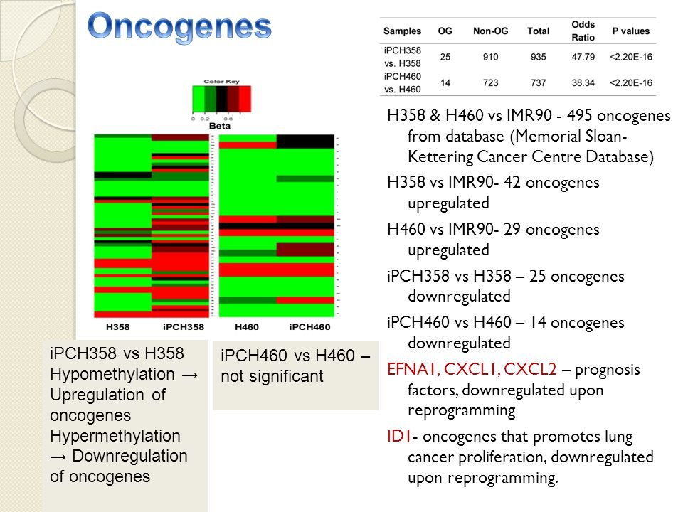 H358 & H460 vs IMR90 - 495 oncogenes from database (Memorial Sloan- Kettering Cancer Centre Database) H358 vs IMR90- 42 oncogenes upregulated H460 vs IMR90- 29 oncogenes upregulated iPCH358 vs H358 – 25 oncogenes downregulated iPCH460 vs H460 – 14 oncogenes downregulated EFNA1, CXCL1, CXCL2 – prognosis factors, downregulated upon reprogramming ID1- oncogenes that promotes lung cancer proliferation, downregulated upon reprogramming.