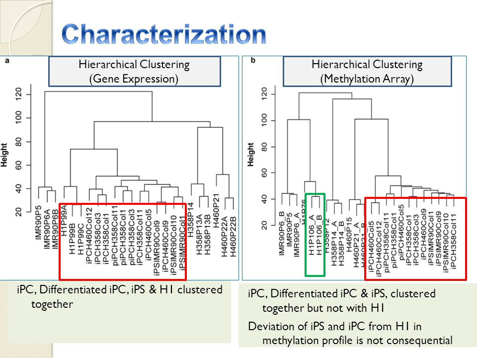 iPC, Differentiated iPC, iPS & H1 clustered together iPC, Differentiated iPC & iPS, clustered together but not with H1 Deviation of iPS and iPC from H1 in methylation profile is not consequential Hierarchical Clustering (Gene Expression) Hierarchical Clustering (Methylation Array)