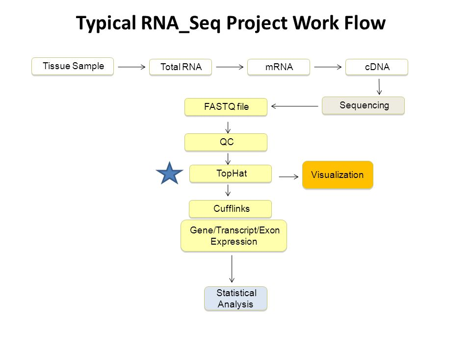 Typical RNA_Seq Project Work Flow Sequencing Tissue Sample Cufflinks TopHat FASTQ file QC Gene/Transcript/Exon Expression Visualization Total RNA mRNA