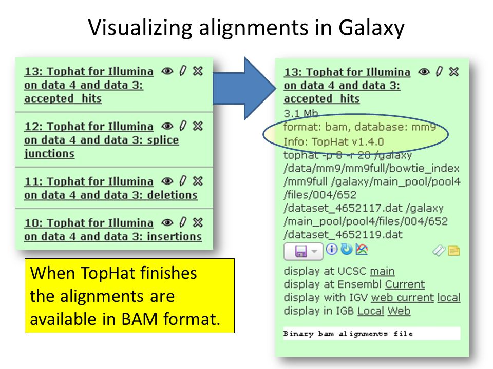 Visualizing alignments in Galaxy When TopHat finishes the alignments are available in BAM format.