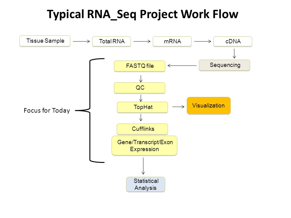 Typical RNA_Seq Project Work Flow Sequencing Tissue Sample Cufflinks TopHat FASTQ file QC Gene/Transcript/Exon Expression Visualization Total RNA mRNA cDNA Statistical Analysis JAX Computational Sciences Service