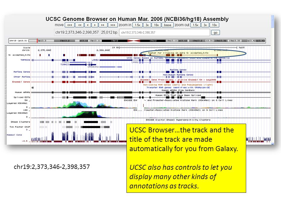chr19:2,373,346-2,398,357 UCSC Browser…the track and the title of the track are made automatically for you from Galaxy. UCSC also has controls to let