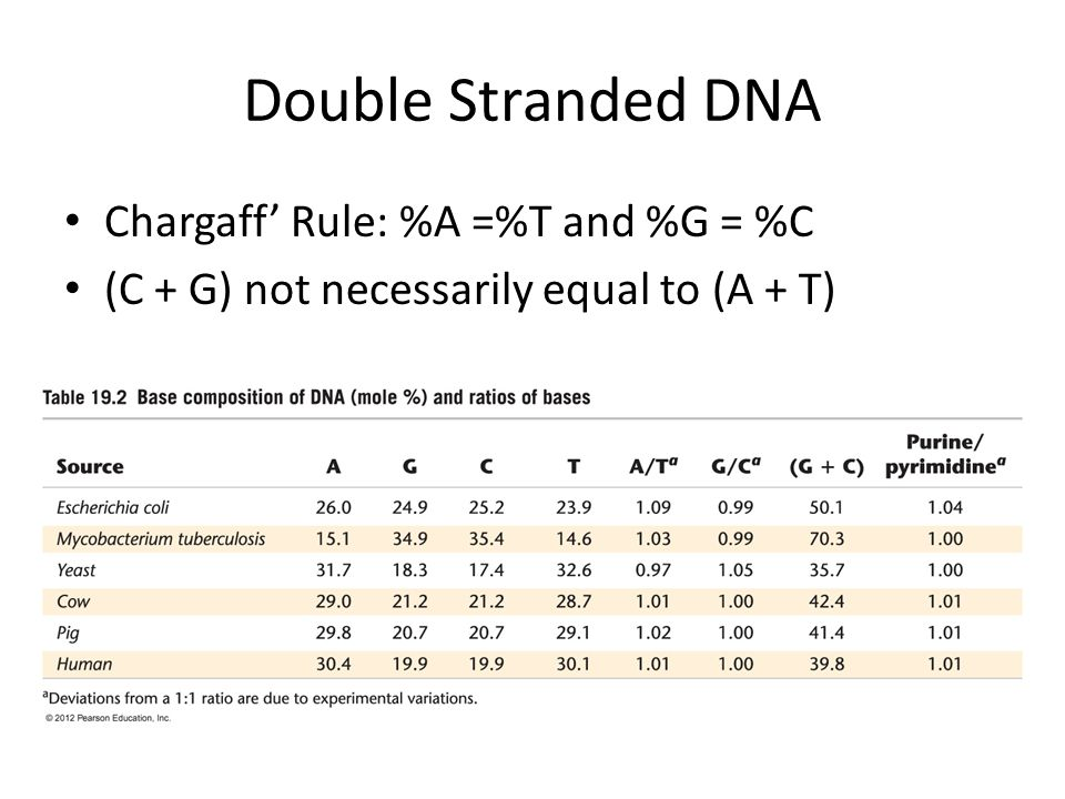 Double Stranded DNA Chargaff' Rule: %A =%T and %G = %C (C + G) not necessarily equal to (A + T)