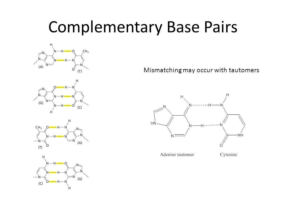 Complementary Base Pairs Mismatching may occur with tautomers