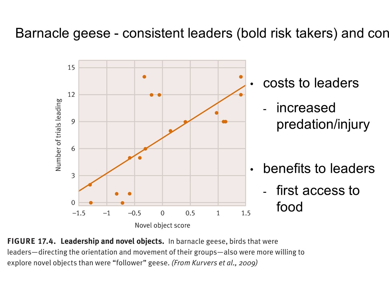 Barnacle geese - consistent leaders (bold risk takers) and consistent followers (Kurvers et al.