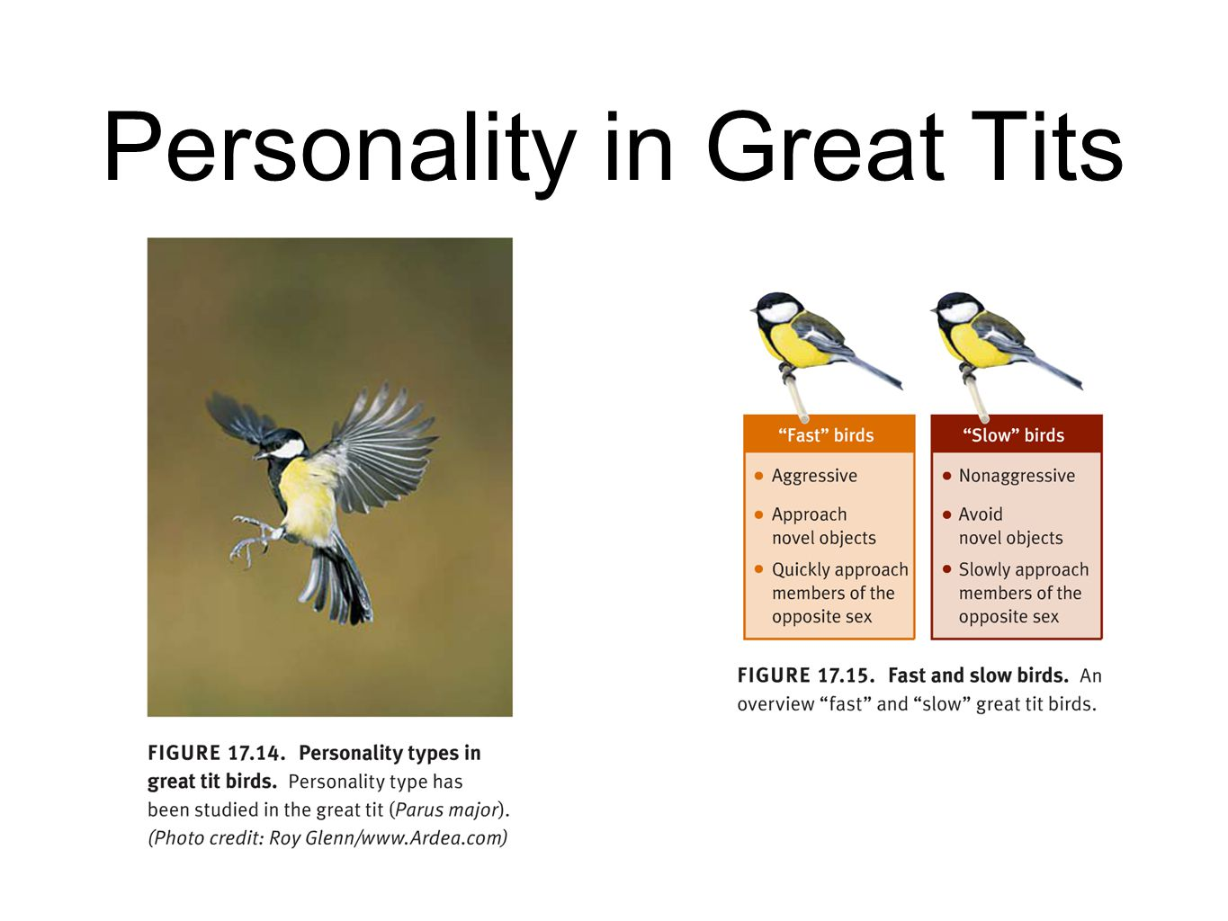 Personality in Great Tits
