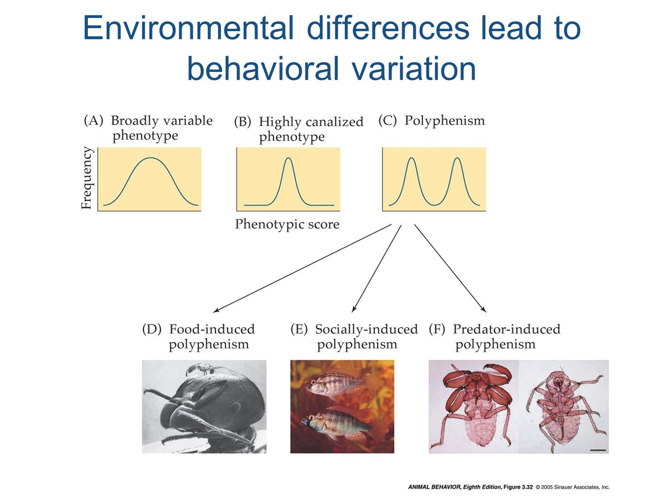 Environmental differences lead to behavioral variation