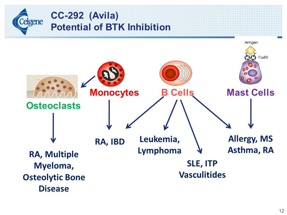 12 CC-292 (Avila) Potential of BTK Inhibition Osteoclasts RA, IBD Leukemia, Lymphoma SLE, ITP Vasculitides Allergy, MS Asthma, RA RA, Multiple Myeloma, Osteolytic Bone Disease MonocytesB CellsMast Cells