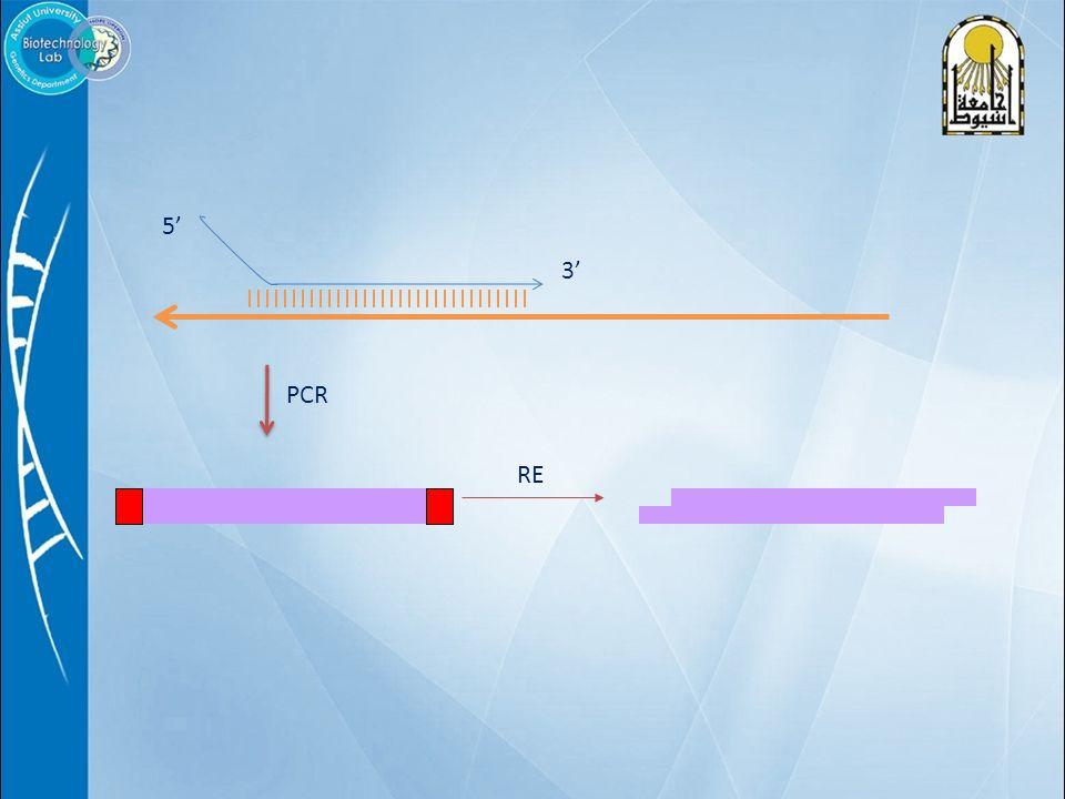 5' 3' RE PCR