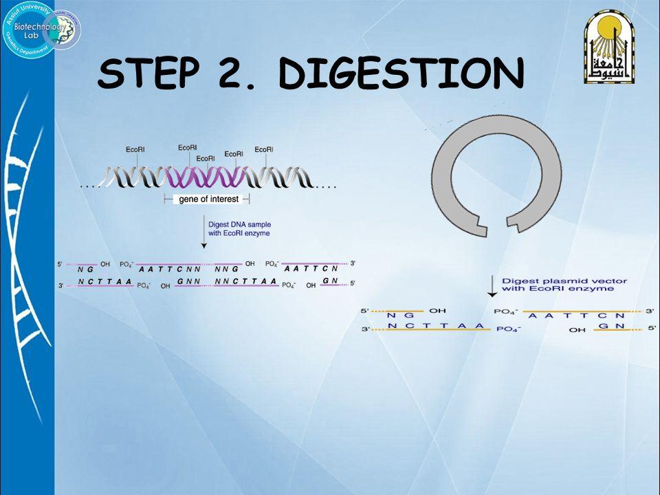 STEP 2. DIGESTION