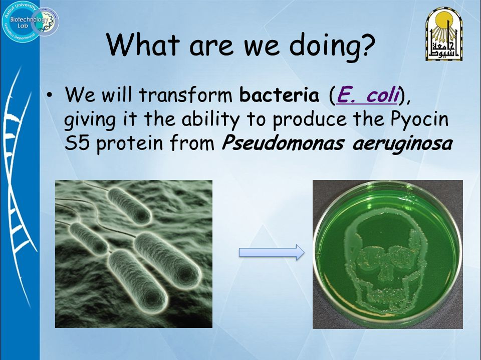What are we doing.We will transform bacteria (E.