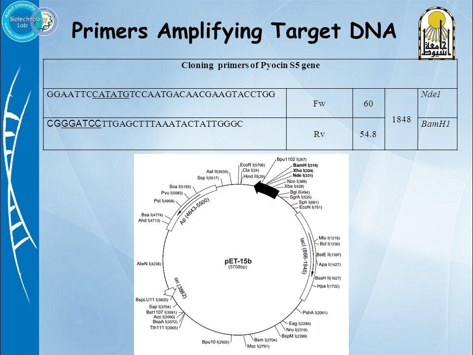 Primers Amplifying Target DNA Cloning primers of Pyocin S5 gene GGAATTCCATATGTCCAATGACAACGAAGTACCTGG Fw60 1848 Nde1 CGGGATCC TTGAGCTTTAAATACTATTGGGC Rv54.8 BamH1