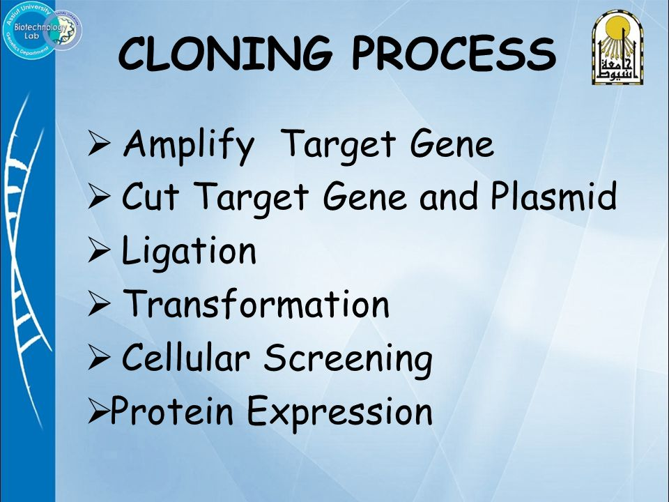 Amplify Target Gene  Cut Target Gene and Plasmid  Ligation  Transformation  Cellular Screening  Protein Expression CLONING PROCESS