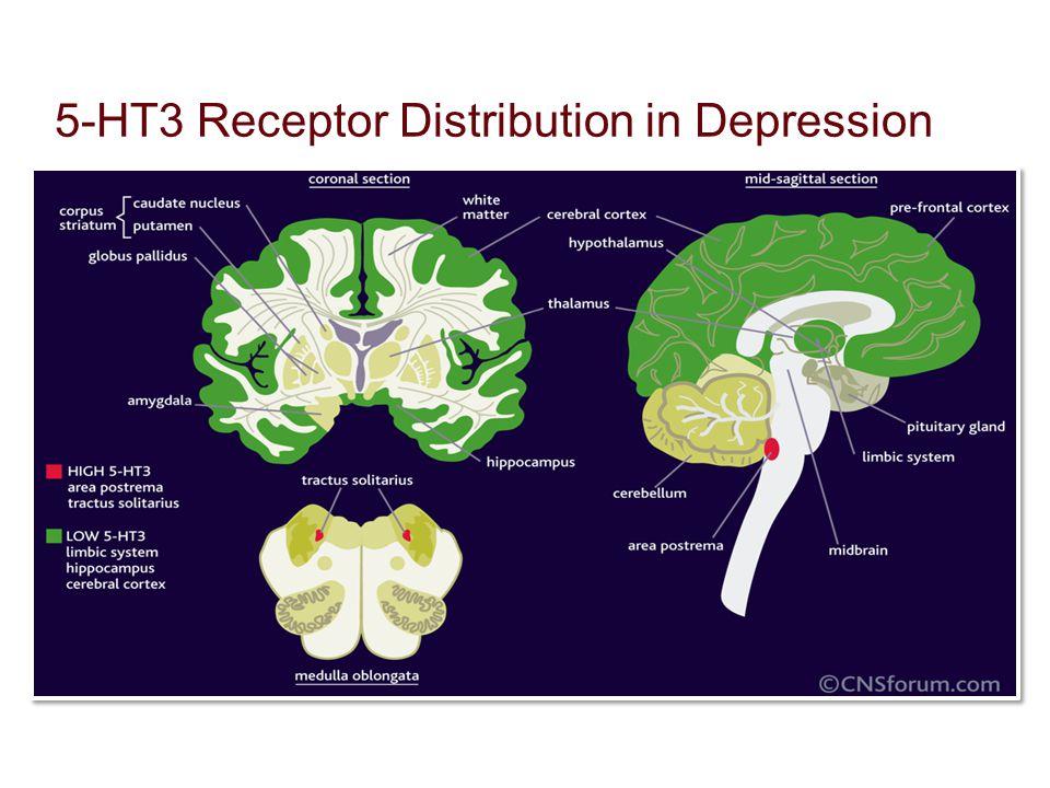 5-HT3 Receptor Distribution in Depression