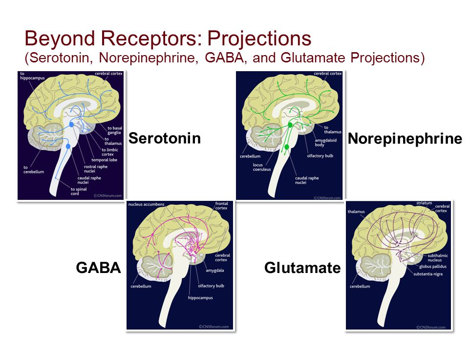 Beyond Receptors: Projections (Serotonin, Norepinephrine, GABA, and Glutamate Projections) Serotonin Norepinephrine GABAGlutamate