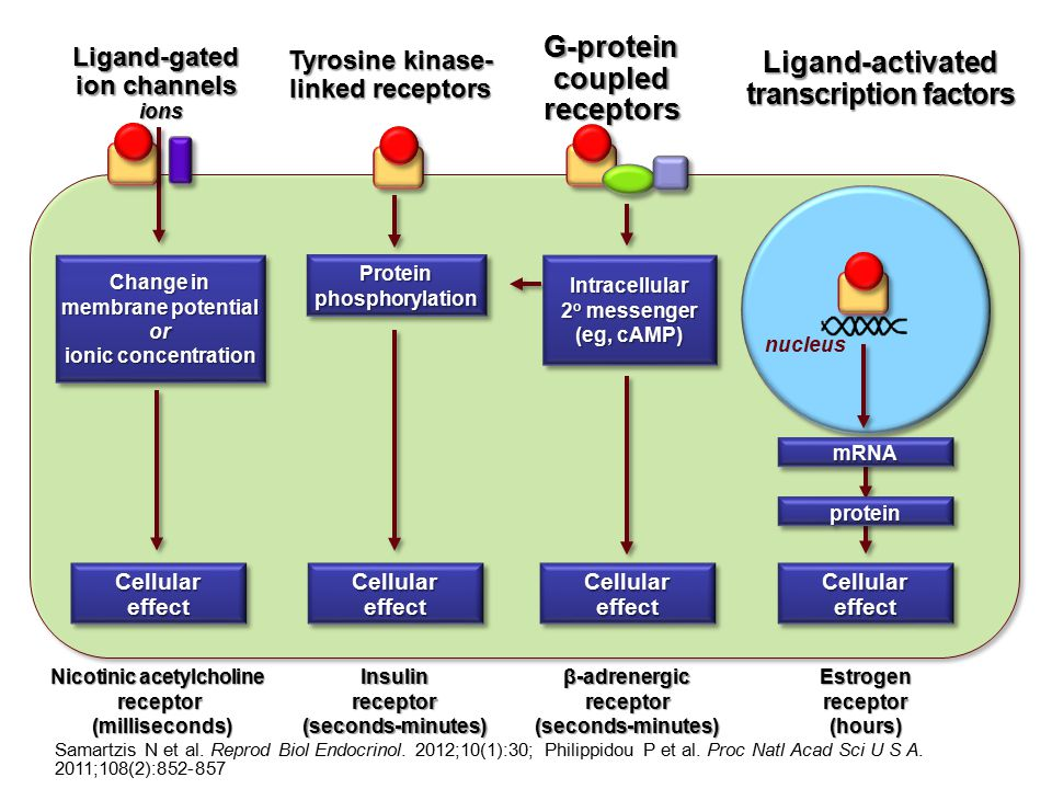 nucleus Ligand-gated ion channels Tyrosine kinase- linked receptors G-protein coupled receptors Ligand-activated transcription factors Nicotinic acety