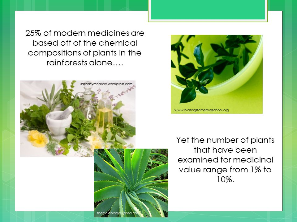 www.blazingstarherbalschool.org satoribymharker.wordpress.com 25% of modern medicines are based off of the chemical compositions of plants in the rainforests alone….