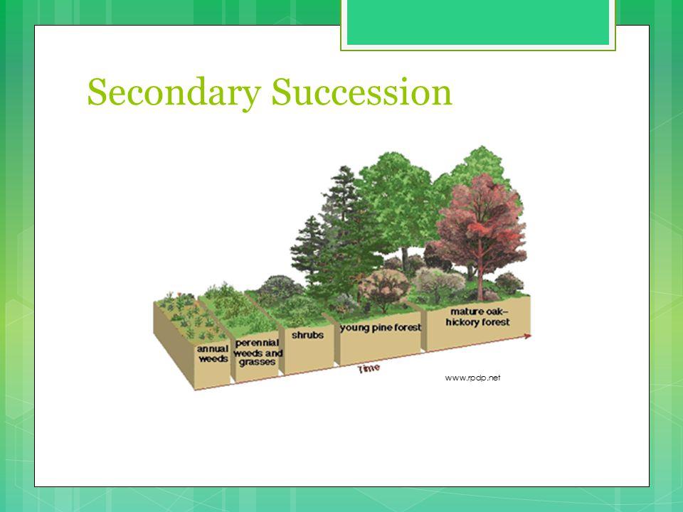 Secondary Succession www.rpdp.net