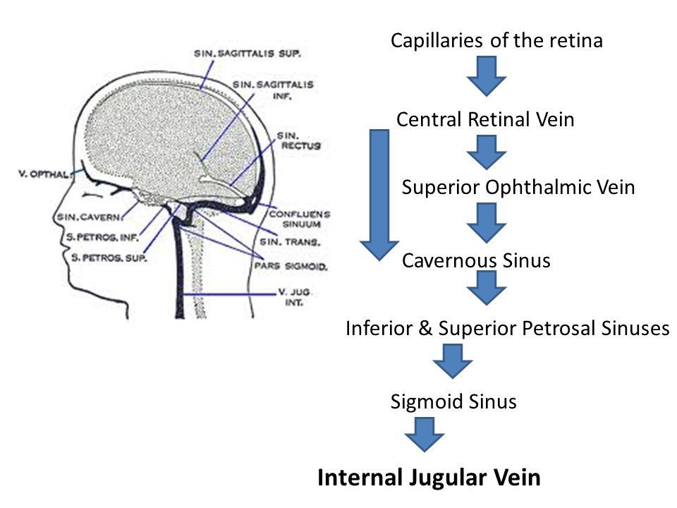 In brain: brain fog, dementia, changes in personality, bipolar presentation (my hypothesis), extreme fatigue.