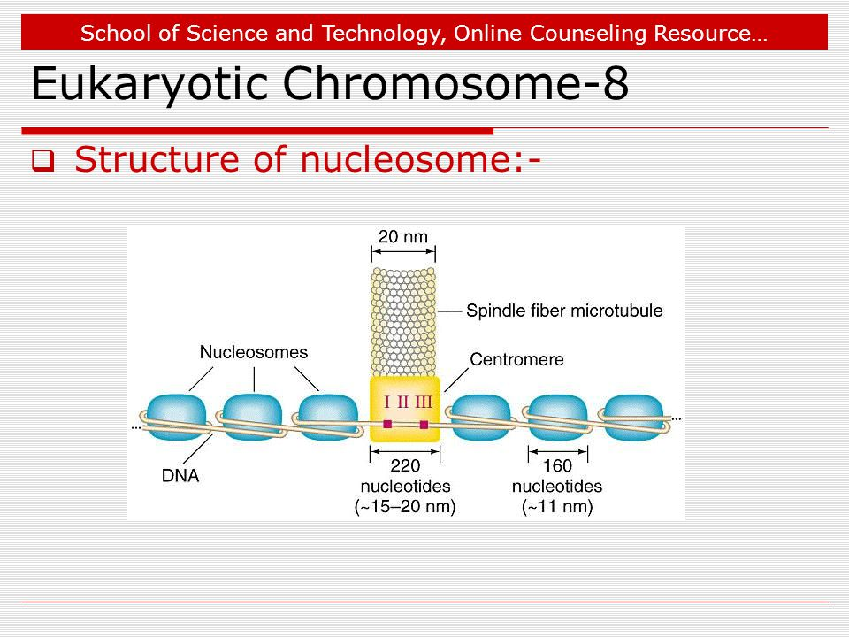 School of Science and Technology, Online Counseling Resource… Eukaryotic Chromosome-8  Structure of nucleosome:-