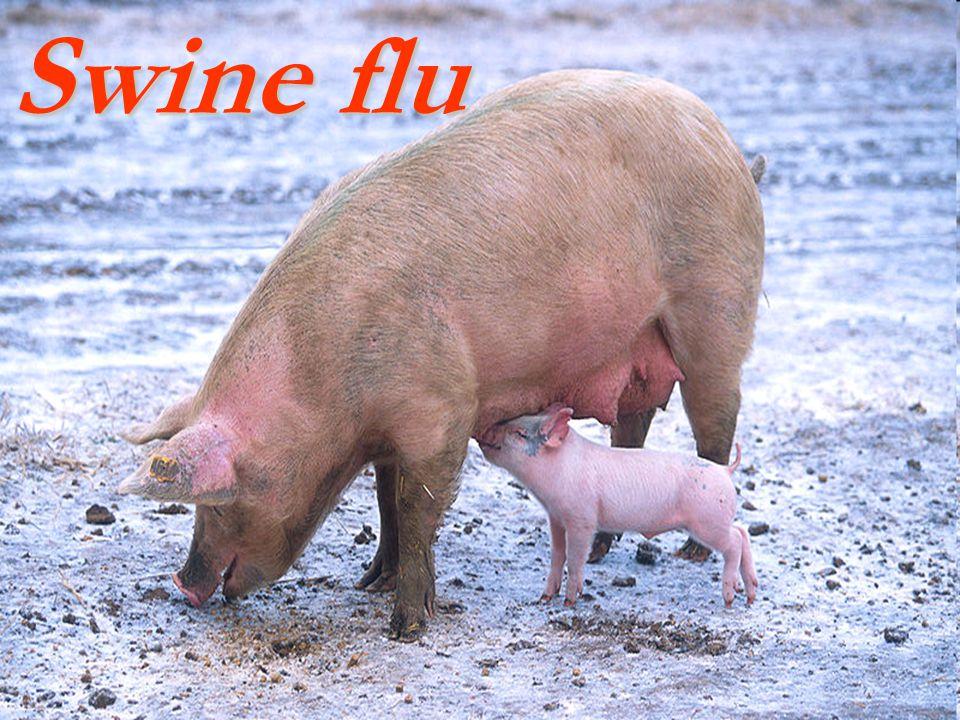 Etiology influenza virus is an orthomyxovirus.