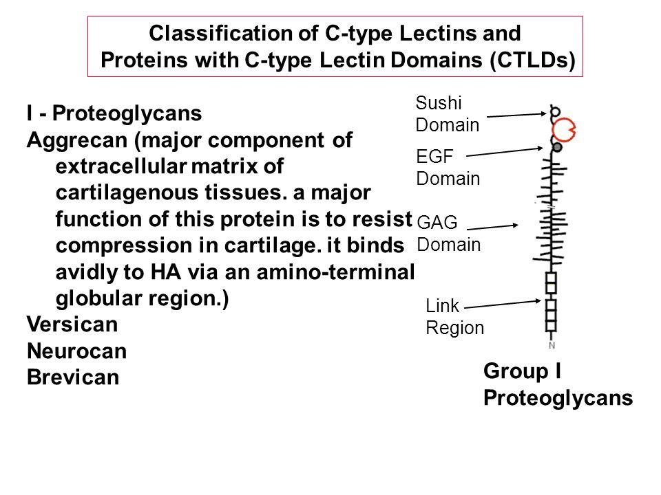 I - Proteoglycans Aggrecan (major component of extracellular matrix of cartilagenous tissues.