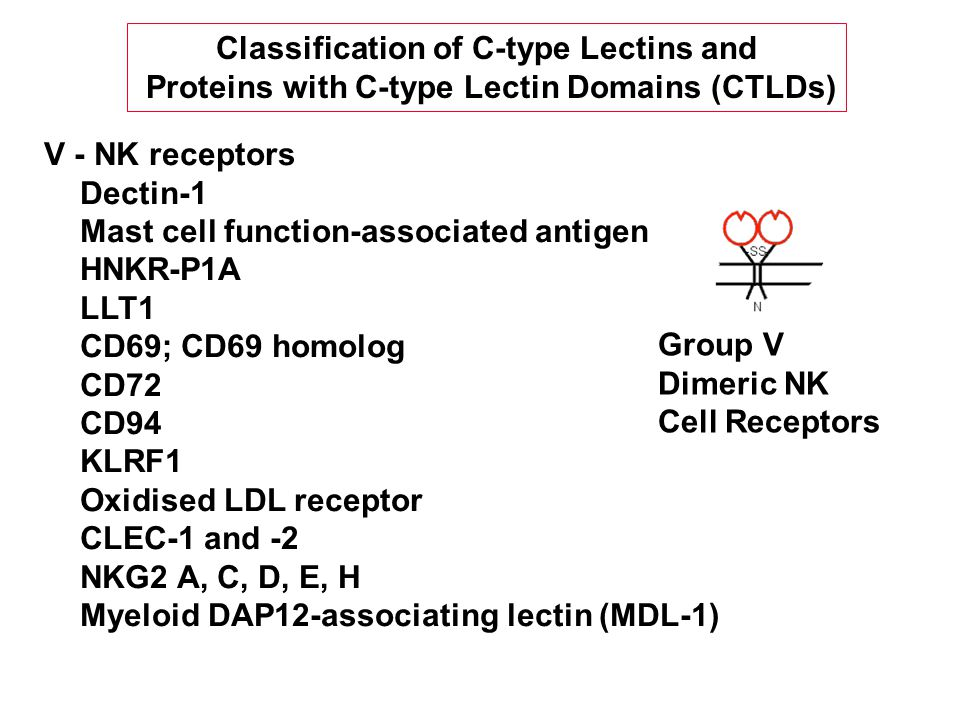 V - NK receptors Dectin-1 Mast cell function-associated antigen HNKR-P1A LLT1 CD69; CD69 homolog CD72 CD94 KLRF1 Oxidised LDL receptor CLEC-1 and -2 NKG2 A, C, D, E, H Myeloid DAP12-associating lectin (MDL-1) Group V Dimeric NK Cell Receptors Classification of C-type Lectins and Proteins with C-type Lectin Domains (CTLDs)